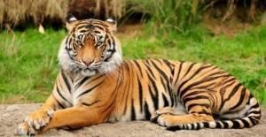 Hayvanlar dünyasından şaşırtıcı gerçekler