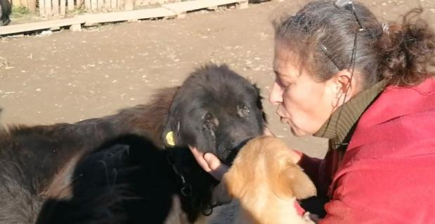 Doğuştan gözleri olmayan köpeğe evladı gibi bakıyor
