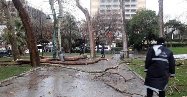 Gezi Parkı'nda kuruyan ağaçlar kaldırılıyor yenileri dikiliyor