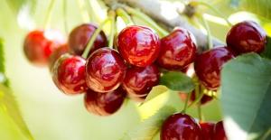 Sağlıklı gıda için 9 tarım ilacına daha yasak, 7 tanesine kısıtlama getirildi