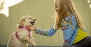 Hangi tasma modeli köpekler için daha sağlıklı? Aktivite önerileriniz var mı?