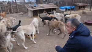 100'e yakın köpeğe bakan hayvansevere destek