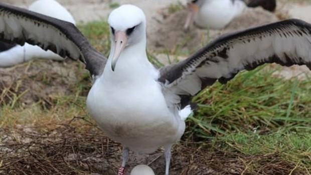 Bu kuş dünyanın en yaşlısı