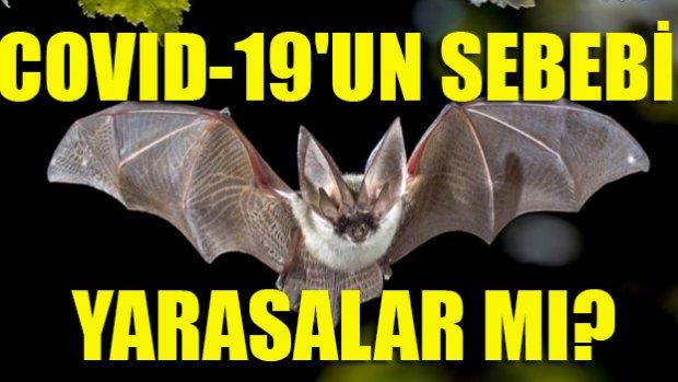 """Prof. Dr. Raşit Bilgin: """"Yarasaları insandan korumanın yollarını bulmalıyız!"""""""