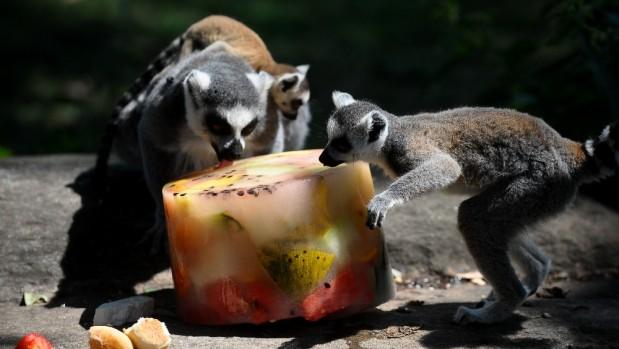 Hayvanların buzlu meyve keyfi