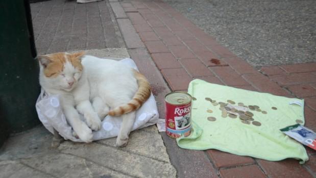 Mama için dilenen kedi fenomen oldu