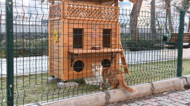 Sokak kedilerine dubleks rahatlık