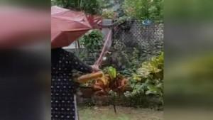 Hindistan'da sel nedeniyle yılanlar sokağa döküldü